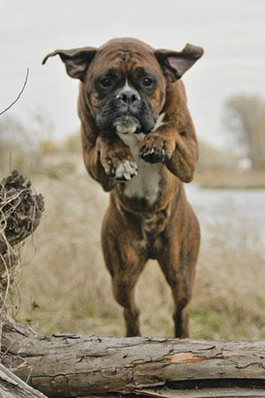 boxer-trening